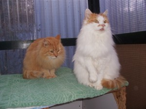 Ginger&Susie040313