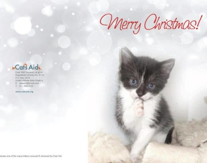 Cats Aid Rescue Christmas Cards