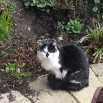 Urgent appeal for 4 lovely cats in Ashbourne