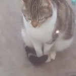 Cat Found Ringsend D4 March/April 2016
