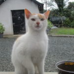 Cat looking for a home in Enniscorthy