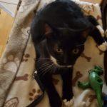 Meet Alfie!