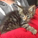 Young Kitten found in Dolphin's Barn Sept  13th
