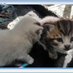 Meet two gorgeous kittens!