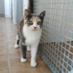 Meet Nala! (booked)