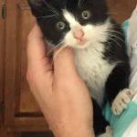 Meet Sparky!