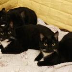Meet Tara, Lara and Luke