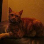 Meet Ginger!