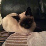 Meet Sienna!