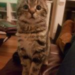 Meet Hermione!