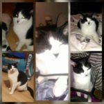 Missing from Cabra since 16th March