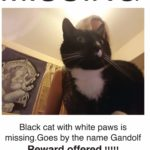 Missing from Ballyfermot/Inchicore/Sarsfield rd Area