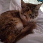 Meet Sandyford Kitten!