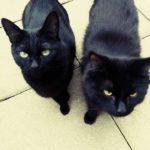 Meet Raven and Jasper