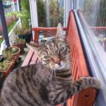 Missing from Wyckham point, Dundrum since 8th May