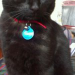 Missing from Donneycarney area since 23rd April