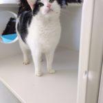 Meet Buscat!