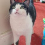 Meet Lola - special appeal!