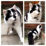 Missing from Palmerstown Park, Dartry since 1st July