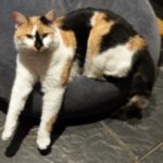Missing from Dodder Rd since Tues 18th July