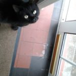 Young Cat Found on Glasnevin Avenue 29th June