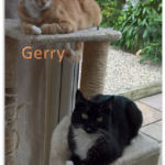 Meet Gerry and Mini-ble!