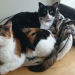Morrigan and Zoe desperately need a new home!