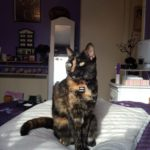 Missing from  Avonmore/Bolbrook in Tallaght since 23rd June