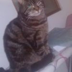 Missing from Blanchardstown since 4th July