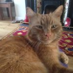 Missing from Lucan since 25th June