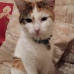 Missing from Saint Albans/South Circular Rd since 23rd June
