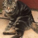 Missing from Bannow Rd in Cabra since June 7th