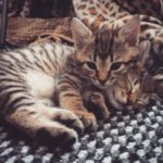 Meet Kit Kat and Beemo