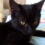 Meet Albus!