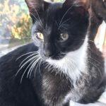 Meet Portia!