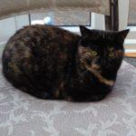 Meet Maisie!