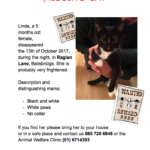 Missing from Raglan Lane Ballsbridge since 13th Oct