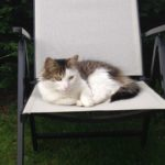 Missing from Earlsfort in Lucan since 21st Oct