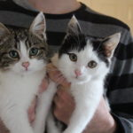 Meet Abigail and Arthur