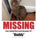Missing from Tullyhall/ Rossberry/Griffeen Rd