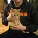Ginger Kitten Found Churchtown 8th Dec