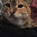 Meet Zoey!