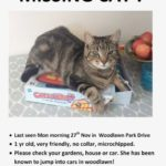 Missing from Woodlawn Park Drive since mid Nov