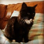 Meet Astrid!