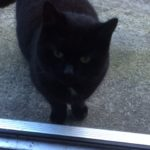 Female Black Cat found in Coolock during Dec.(We have rehomed this lovely girl)