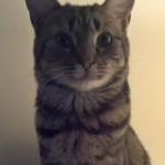 Meet Phoebe!