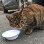 Tabby found Wexford (Ferns/Harrow area) - Jan 7 - Update ....now with North Wexford SPCA for rehoming