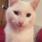 Prince Charming missing from Grace Park Heights, D 9 ( Found safe and well thanks to everybody who cared and shared)