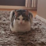 Flash is missing from Raheny since 24th March 18
