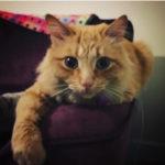 Meet Rocky!